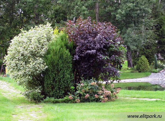 Декоративные деревья и кустарники лиственные