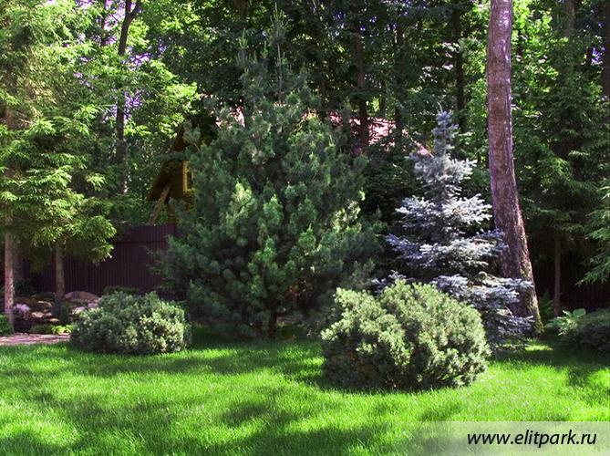 Посадка деревьев и кустарников.